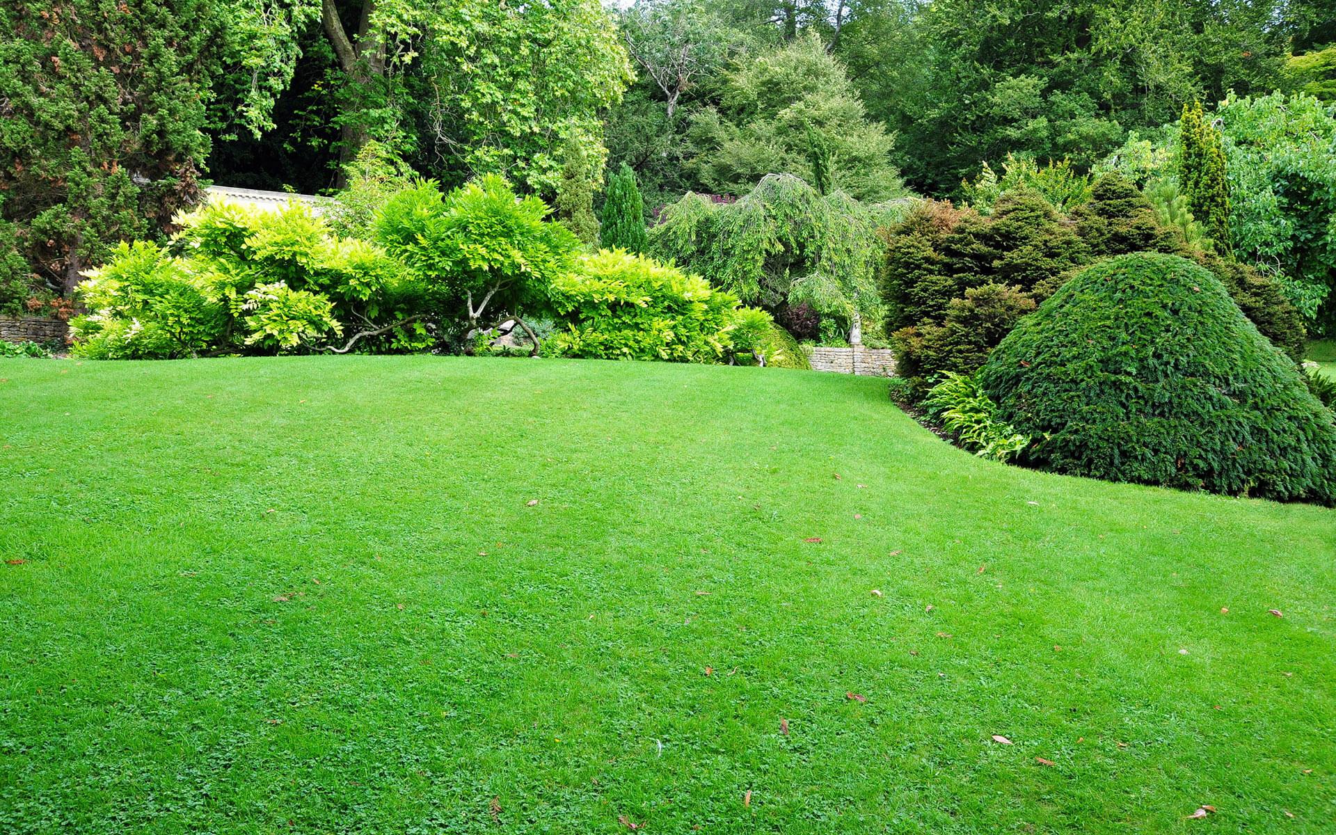 Mantenimiento césped y jardines